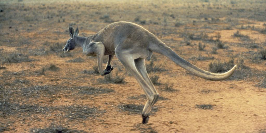 Quiz Template: Australia